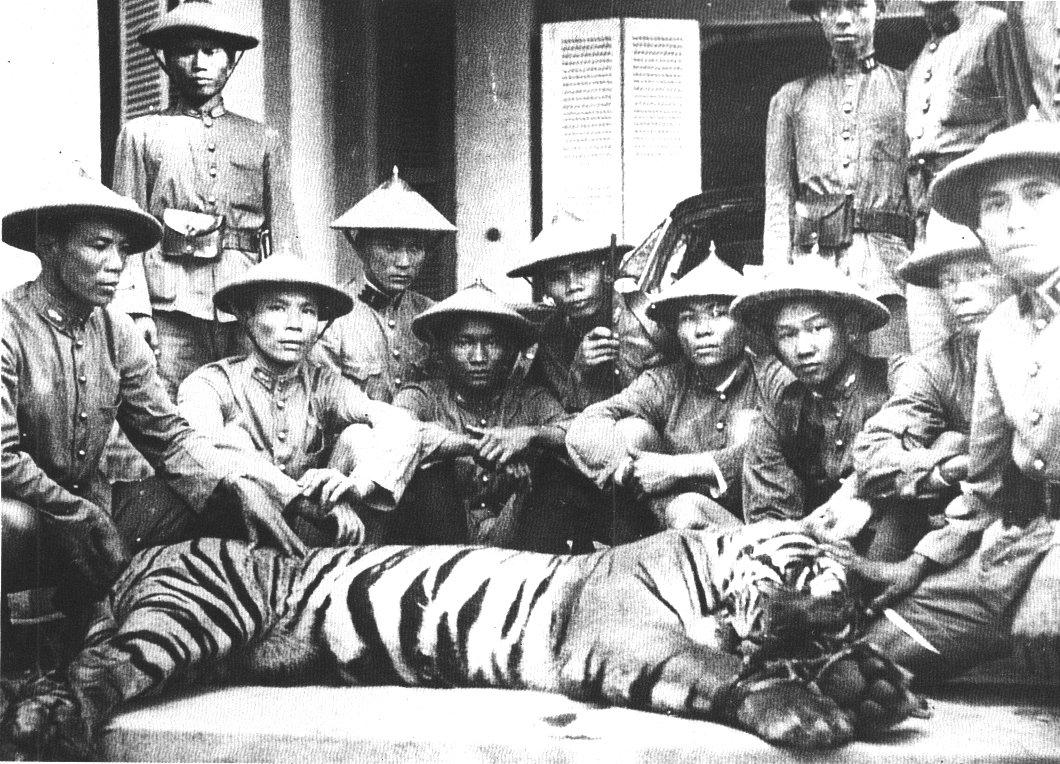 tigre_1937.jpg (240690 octets)